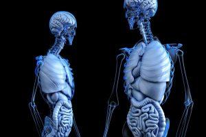Quels sont les traitements de l'ostéophytose?